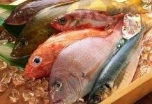 cá nhiễm độc phenol
